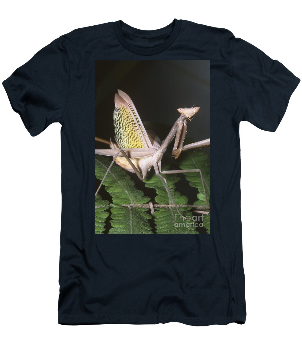Fauna Men's T-Shirt (Athletic Fit) featuring the photograph Mantid Defensive Display by Dante Fenolio