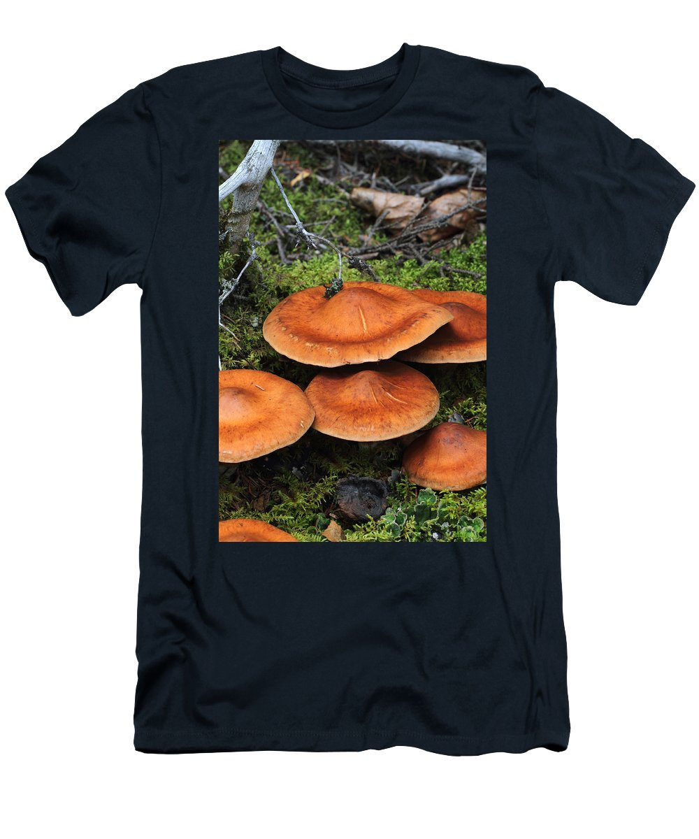 Doug Lloyd Men's T-Shirt (Athletic Fit) featuring the photograph Orange Beauty by Doug Lloyd