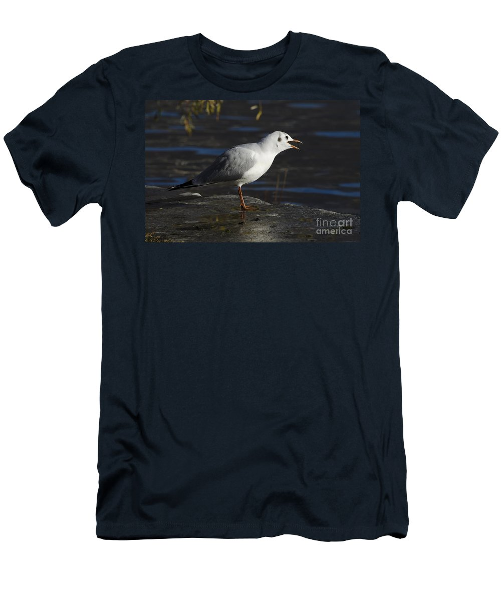 Seagull Men's T-Shirt (Athletic Fit) featuring the photograph Talking Bird by Mats Silvan