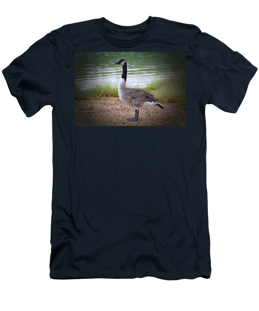 Canadian Goose Men's T-Shirt (Athletic Fit) featuring the photograph Upright Stance by Douglas Barnard