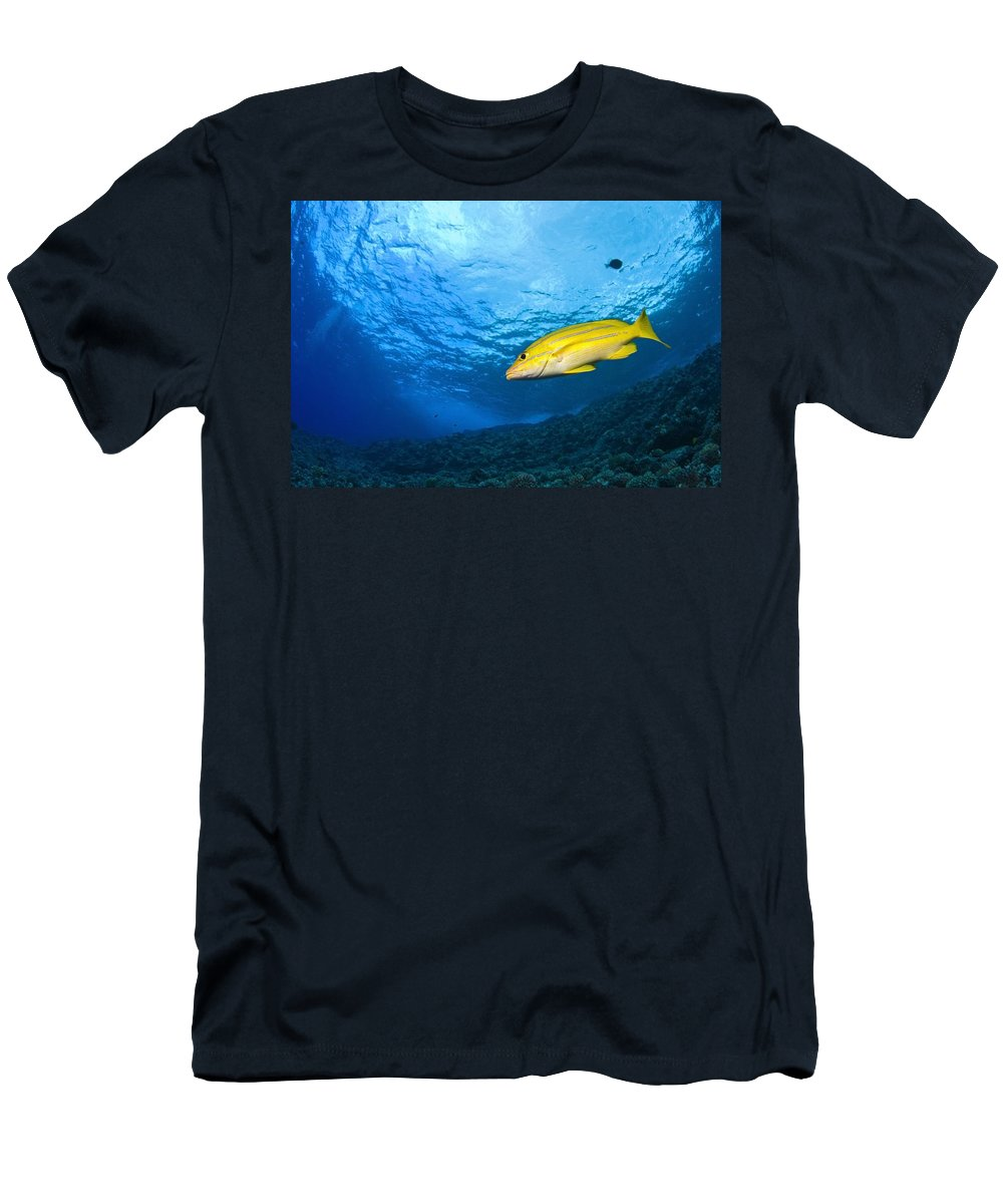 America Men's T-Shirt (Athletic Fit) featuring the photograph Yellowtail Snapper, Molokini Crater by Stuart Westmorland