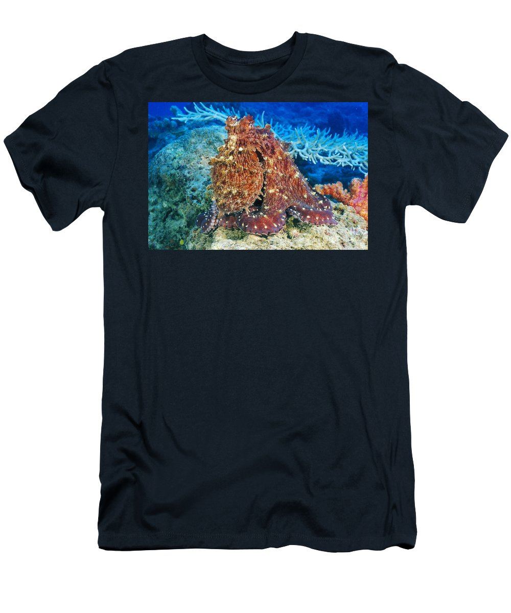 30-pfs0115 Men's T-Shirt (Athletic Fit) featuring the photograph Fiji, Day Octopus by Dave Fleetham - Printscapes
