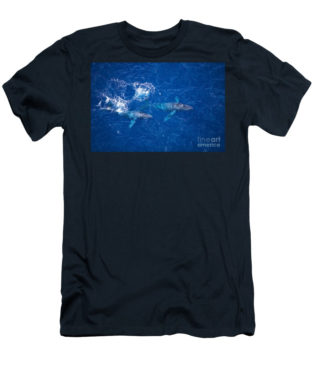 Above Men's T-Shirt (Athletic Fit) featuring the photograph Humpback Whales Aerial by Ron Dahlquist - Printscapes