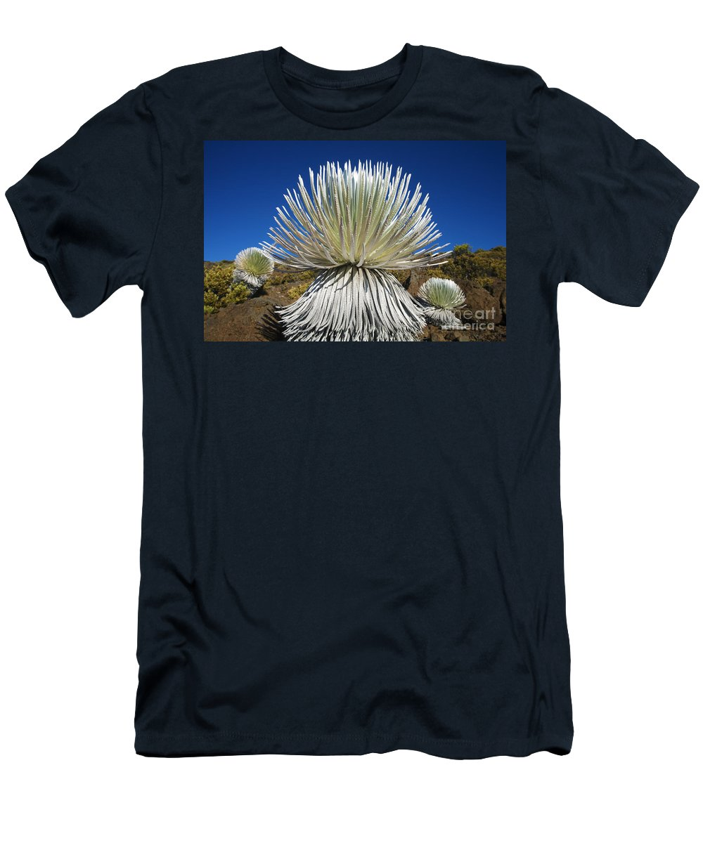 Ahinahina Men's T-Shirt (Athletic Fit) featuring the photograph Silversword Plant by Ron Dahlquist - Printscapes