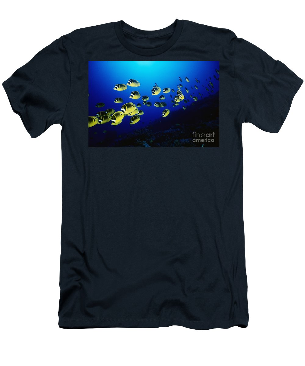 Animal Art Men's T-Shirt (Athletic Fit) featuring the photograph Raccoon Butterflyfish by Dave Fleetham - Printscapes