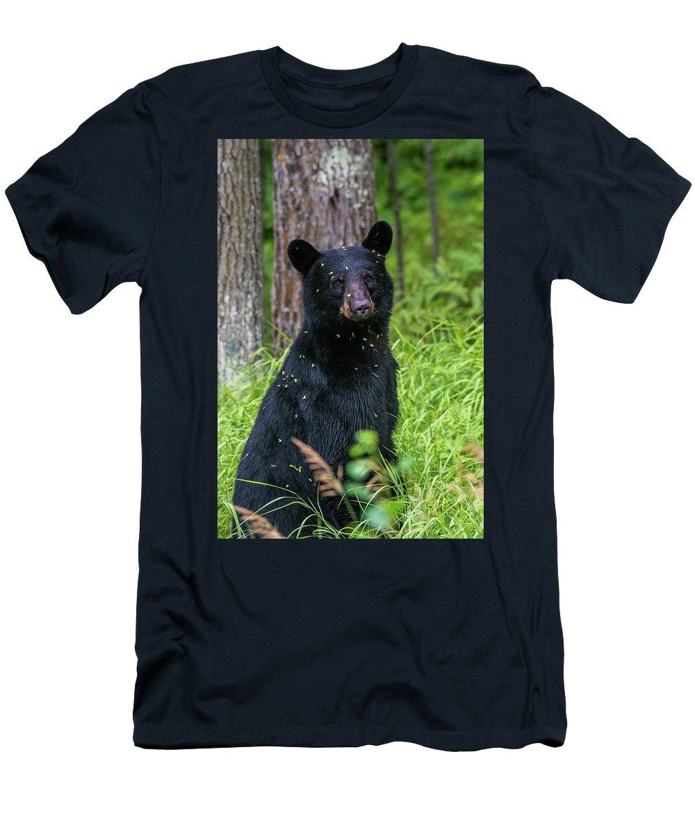 Black Bear Men's T-Shirt (Athletic Fit) featuring the photograph Black Bear by Paul Freidlund