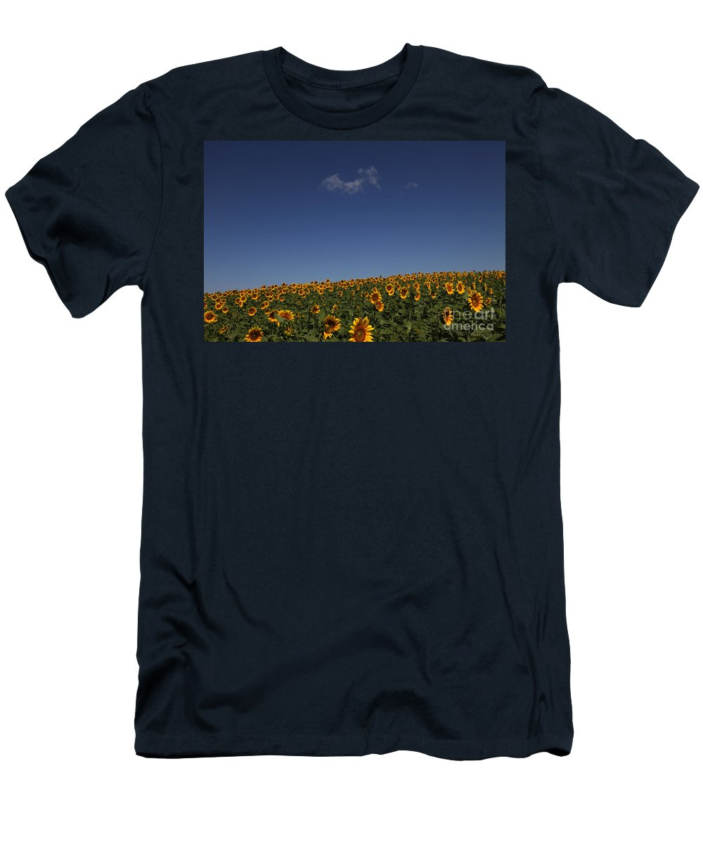 Sunflowers Men's T-Shirt (Athletic Fit) featuring the photograph Curvature by Amanda Barcon