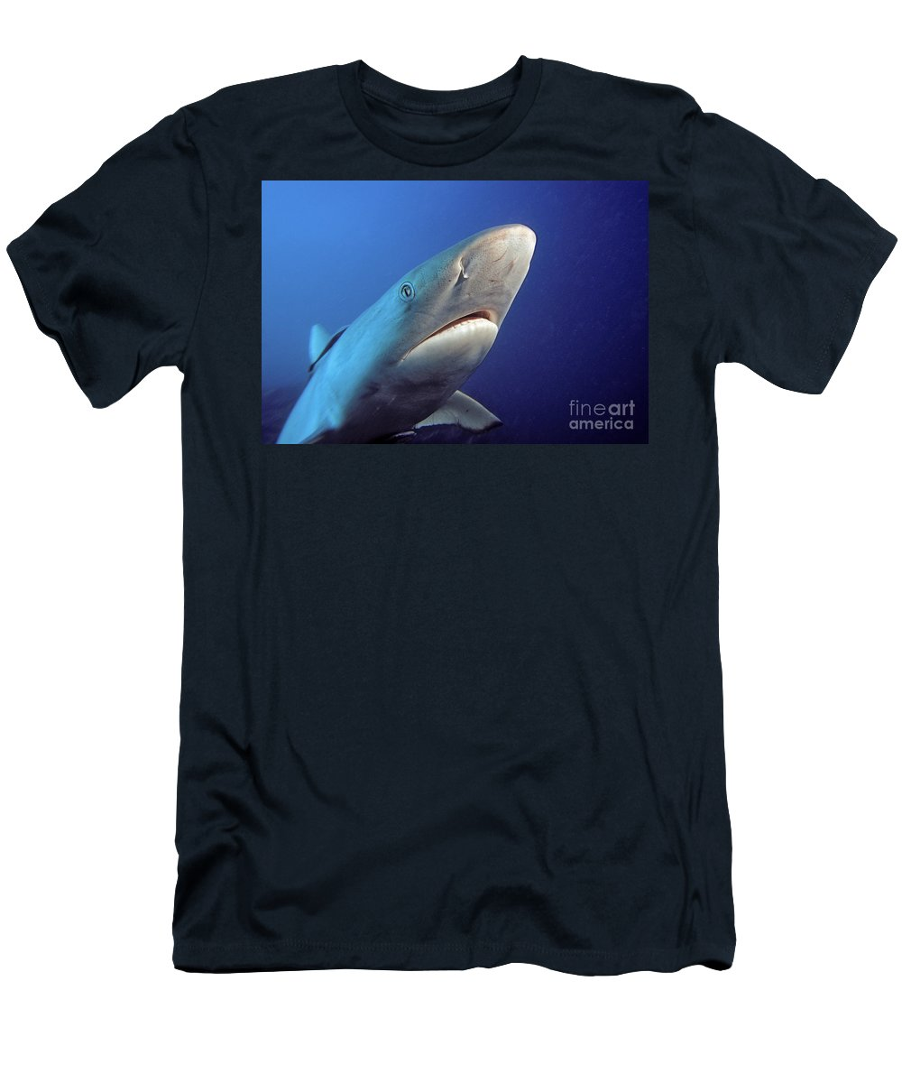 Amblyrhnchos Men's T-Shirt (Athletic Fit) featuring the photograph Gray Reef Shark by Dave Fleetham - Printscapes