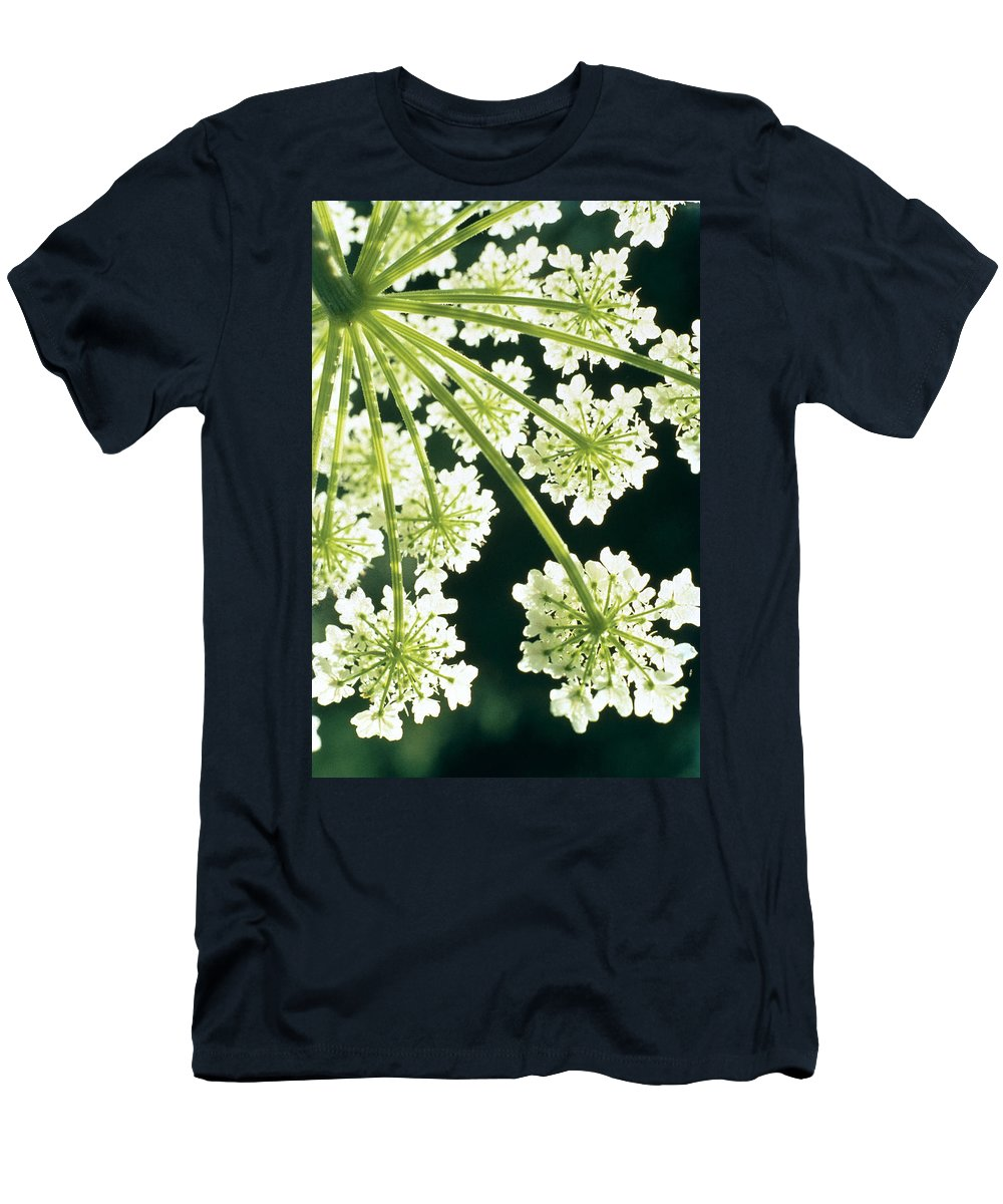 Flower Men's T-Shirt (Athletic Fit) featuring the photograph Himalayan Hogweed Cowparsnip by American School