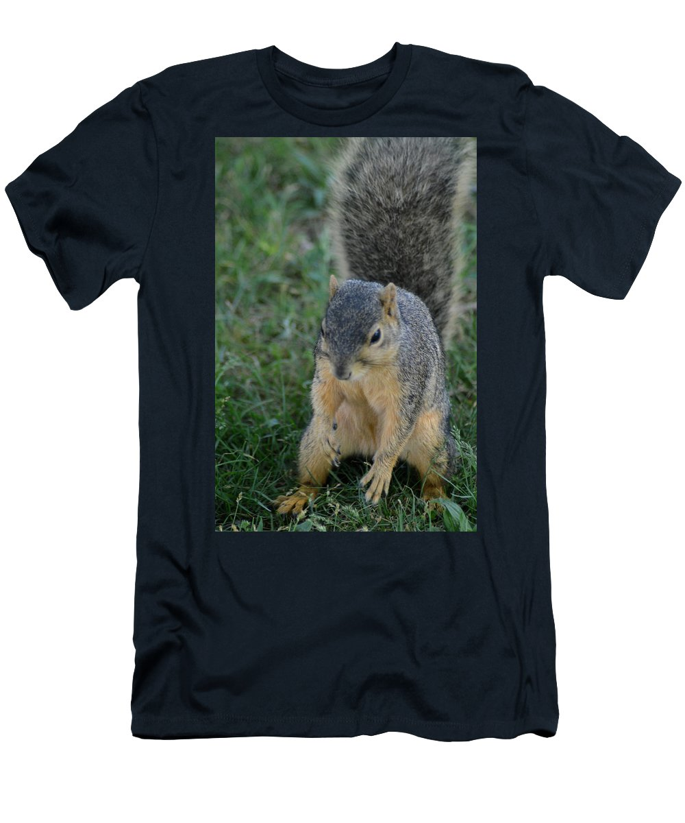 Squirrel Men's T-Shirt (Athletic Fit) featuring the photograph Inquisitive Squirrel by Belinda Stucki