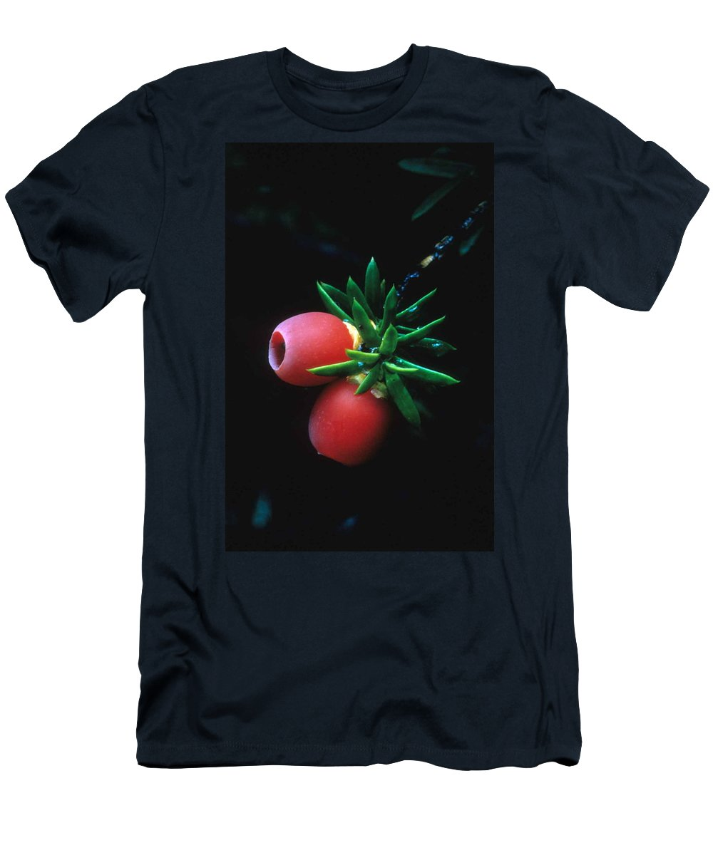 Juniper Berries Men's T-Shirt (Athletic Fit) featuring the photograph Juniper Berries by Laurie Paci