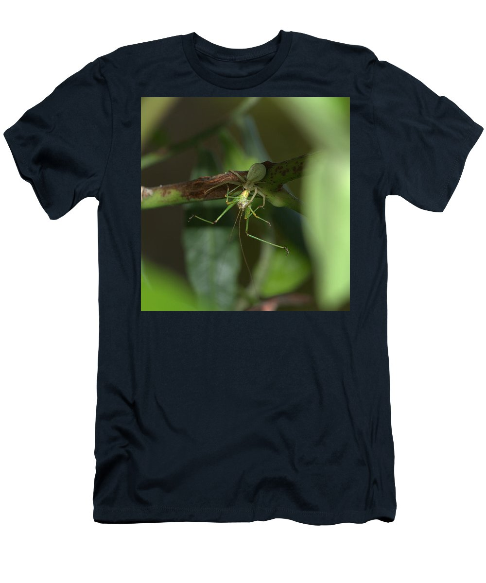 Spider Men's T-Shirt (Athletic Fit) featuring the photograph Lunch Time by Ricardo Oliveira