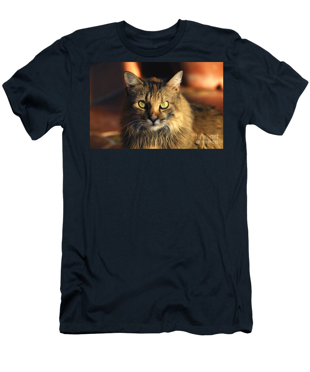 Main Coone Men's T-Shirt (Athletic Fit) featuring the photograph Main Coone by David Lee Thompson