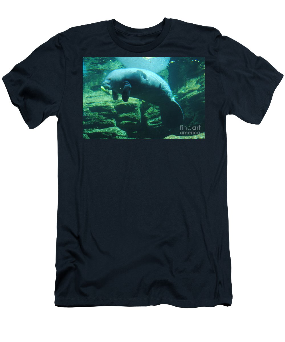 Manatee Men's T-Shirt (Athletic Fit) featuring the photograph Manatee by Jost Houk