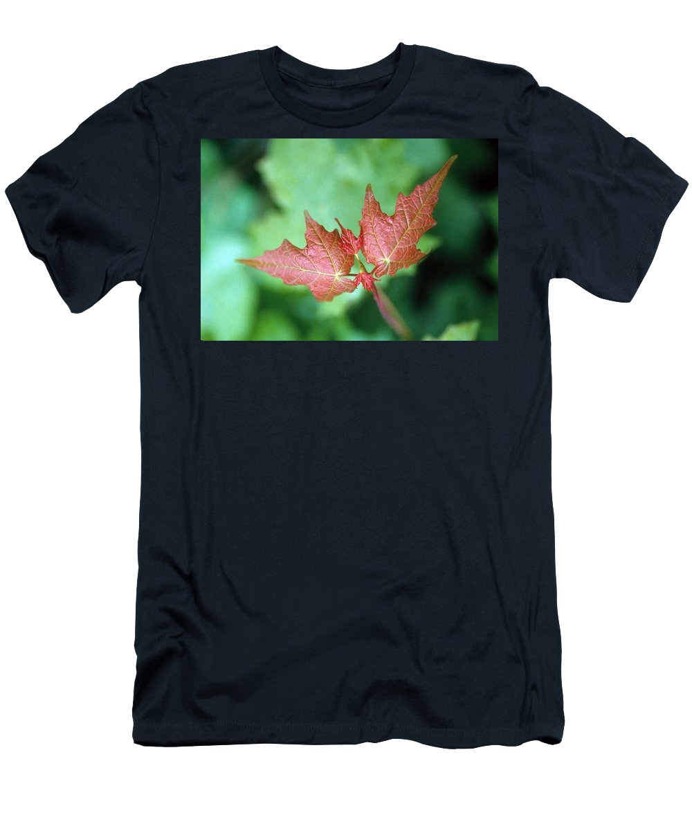 Maple Leaf Men's T-Shirt (Athletic Fit) featuring the photograph Maple Red And Green by Laurie Paci