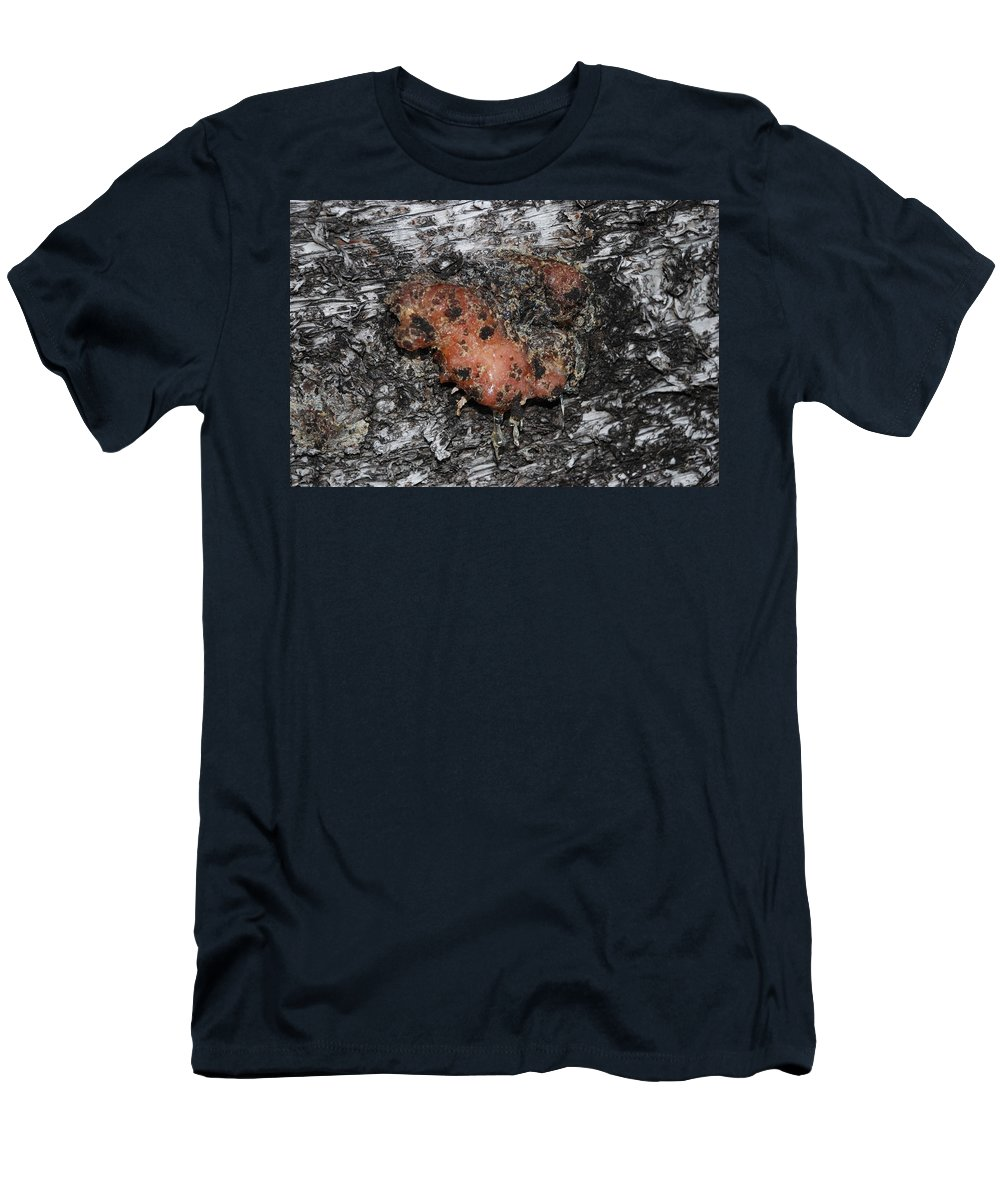 Sap Men's T-Shirt (Athletic Fit) featuring the photograph Sap Of The Tree by Rob Hans