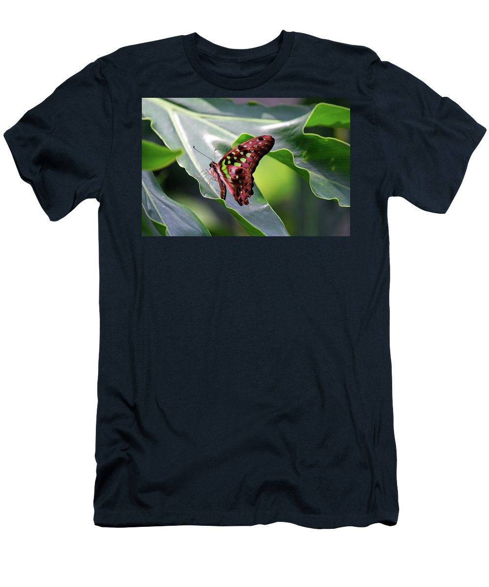 Tailed Jay Men's T-Shirt (Athletic Fit) featuring the photograph Tailed Jay Butterfly by Maria Keady