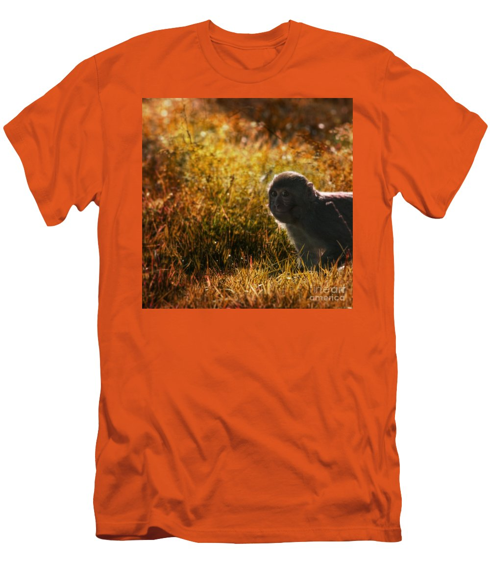 Monkey Men's T-Shirt (Athletic Fit) featuring the photograph Where Are You My Precious by Angel Ciesniarska