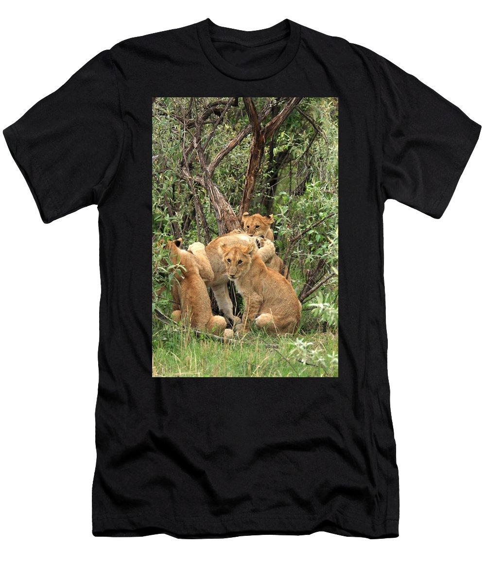 Africa Men's T-Shirt (Athletic Fit) featuring the photograph Masai Mara Lion Cubs by Aidan Moran
