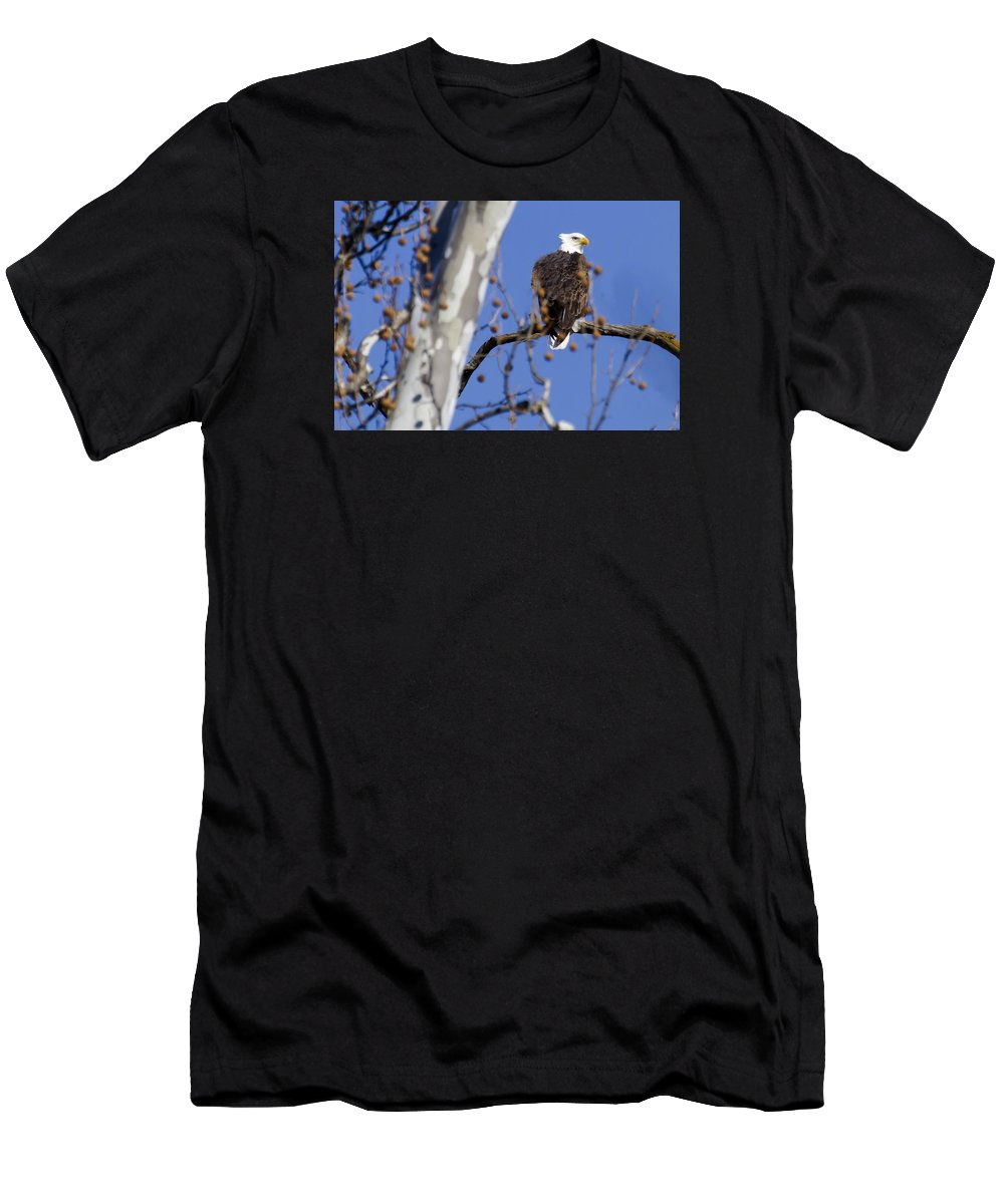 Eagle Men's T-Shirt (Athletic Fit) featuring the photograph Bald Eagle 2 by David Lester