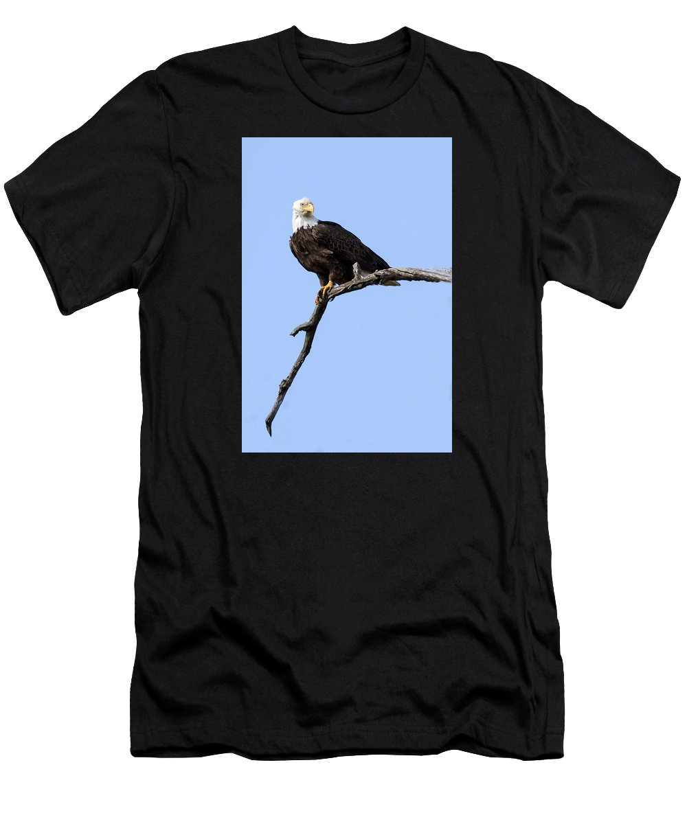 Eagle Men's T-Shirt (Athletic Fit) featuring the photograph Bald Eagle 7 by David Lester