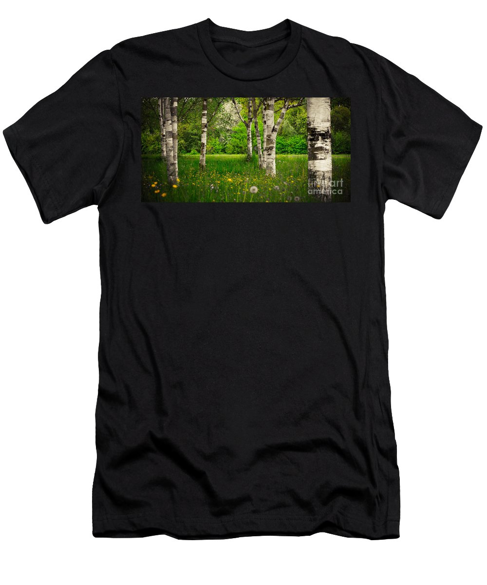 Birch Men's T-Shirt (Athletic Fit) featuring the photograph Birches by Hannes Cmarits