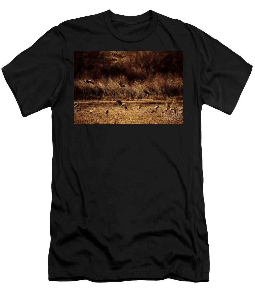 Bosque Del Apache Men's T-Shirt (Athletic Fit) featuring the photograph Bosque Del Apache New Mexico-sand Cranes V2 by Douglas Barnard