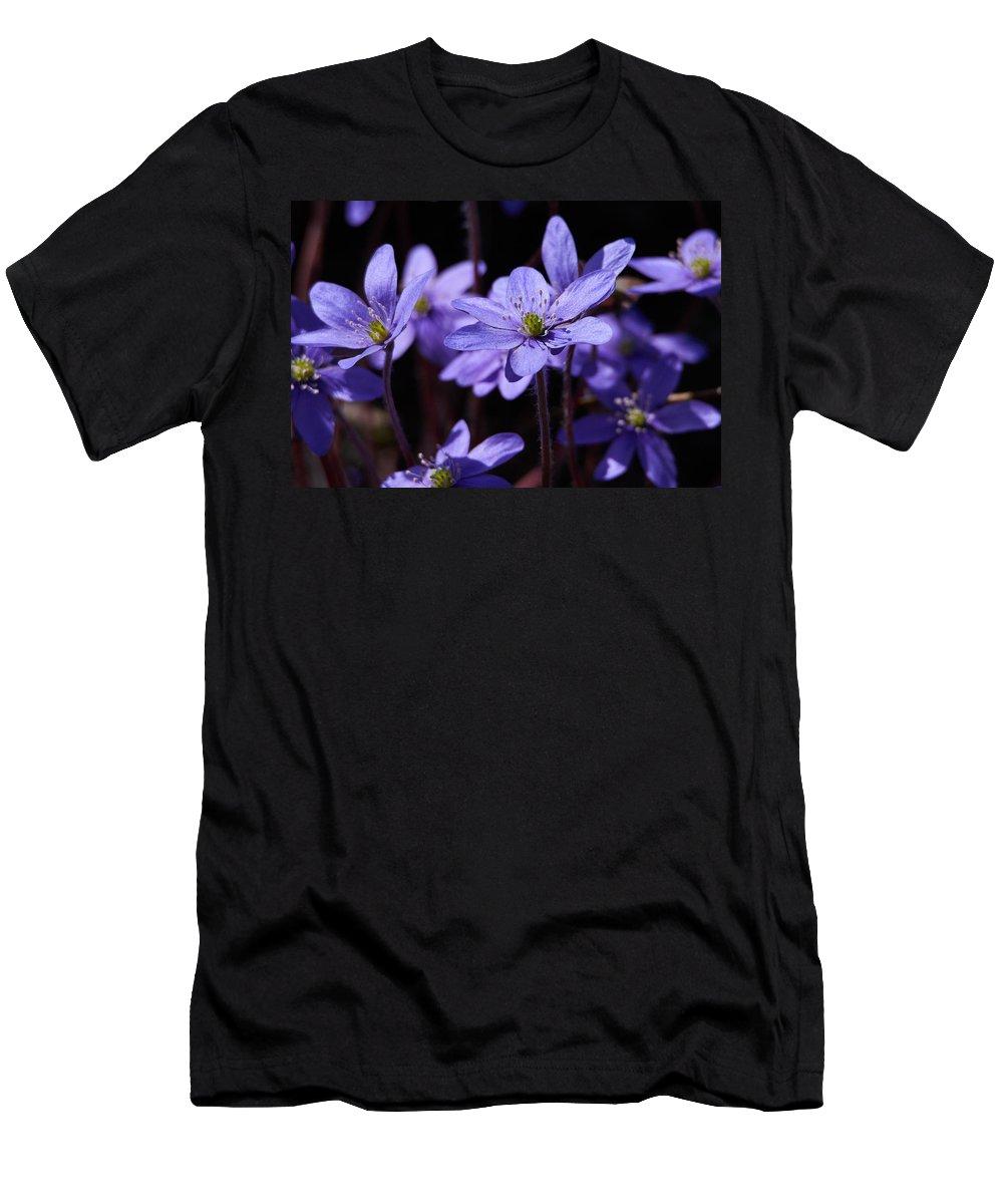 Lehto Men's T-Shirt (Athletic Fit) featuring the photograph Common Hepatica by Jouko Lehto
