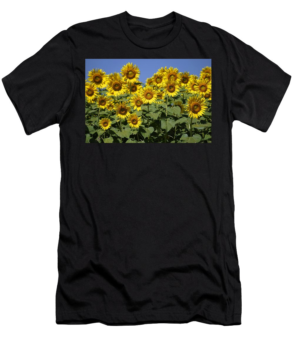 Feb0514 Men's T-Shirt (Athletic Fit) featuring the photograph Common Sunflower Flowers Japan by Hiroya Minakuchi