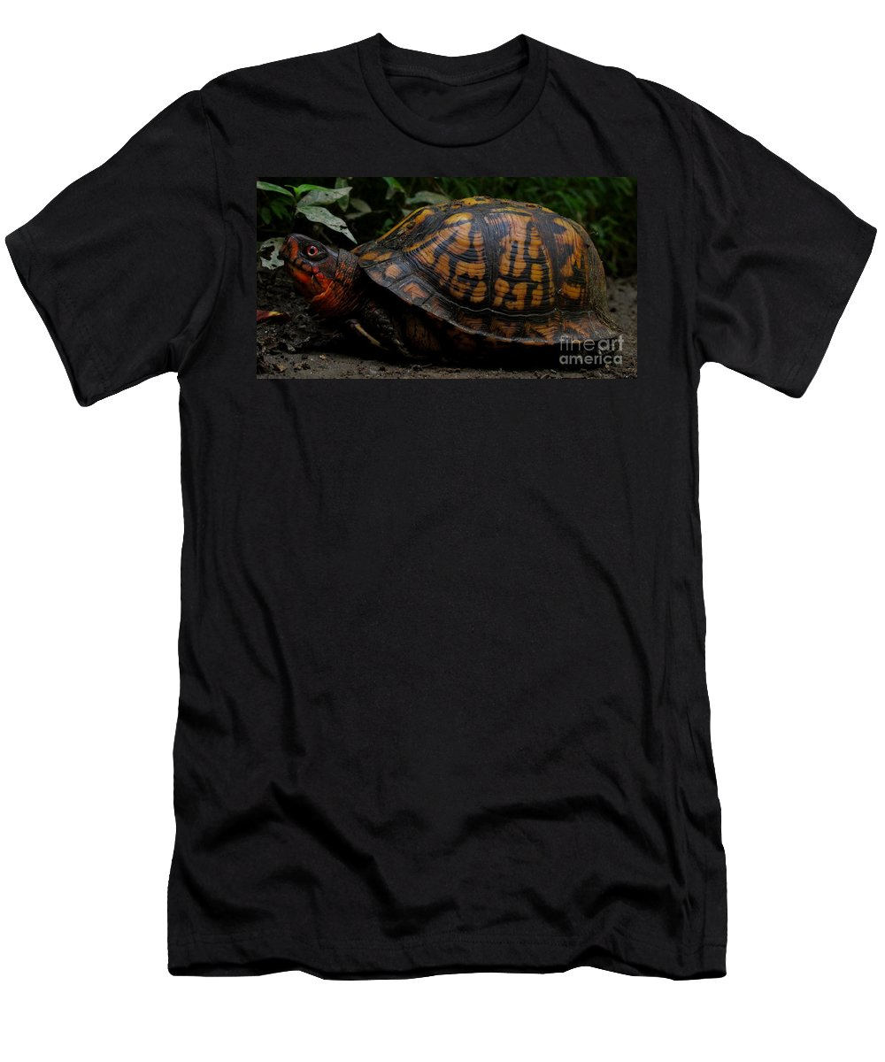 Eastern Box Turtle North American Reptiles North American Turtles Wild Animals Of North American Wildlife Chesapeake Biodiversity Forest Creatures Seasonal Woodland Ecosystem Mid Atlantic Region Fauna Colorful Critters Orange Box Turtle Men's T-Shirt (Athletic Fit) featuring the photograph Eastern Box Turtle by Joshua Bales