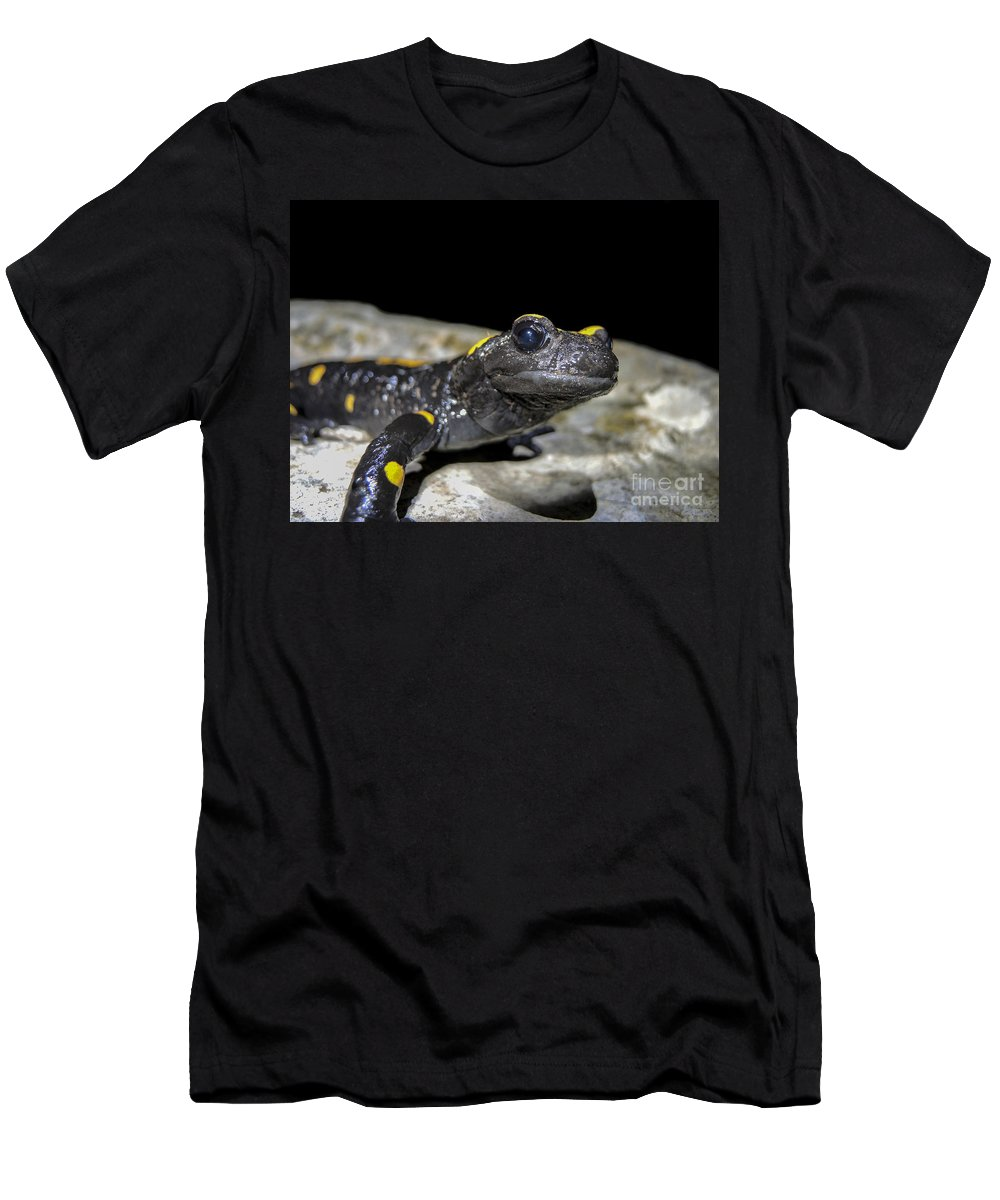Fire Salamander Men's T-Shirt (Athletic Fit) featuring the photograph Fire Salamander Salamandra Salamandra by Shay Levy