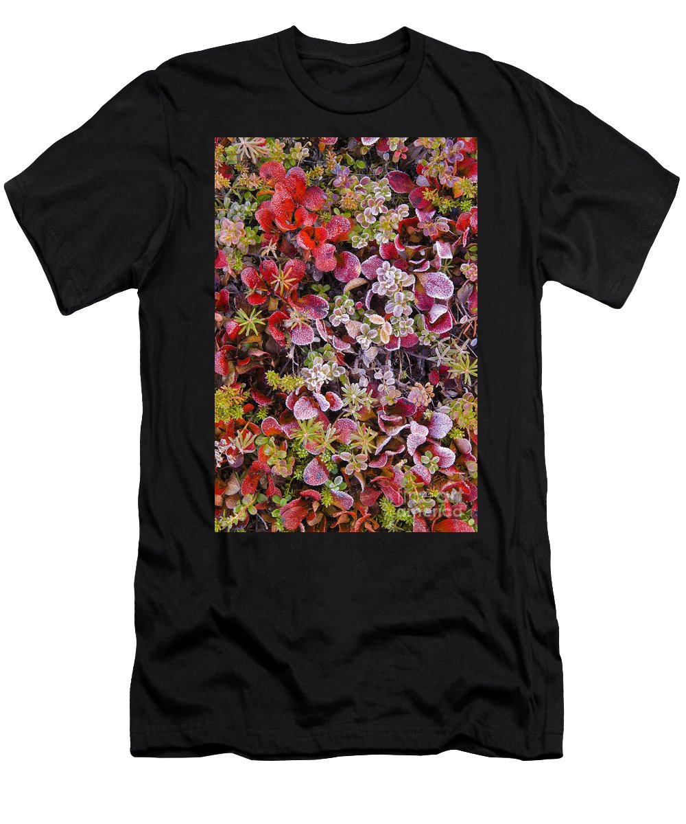 Denali National Park Men's T-Shirt (Athletic Fit) featuring the photograph Frost On Autumn Tundra by John Shaw