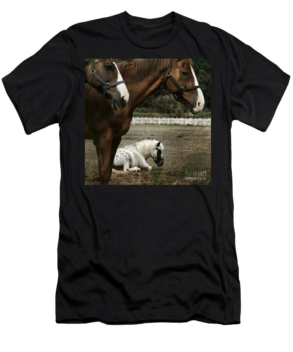 Appaloosa Men's T-Shirt (Athletic Fit) featuring the photograph Having A Rest by Angel Ciesniarska