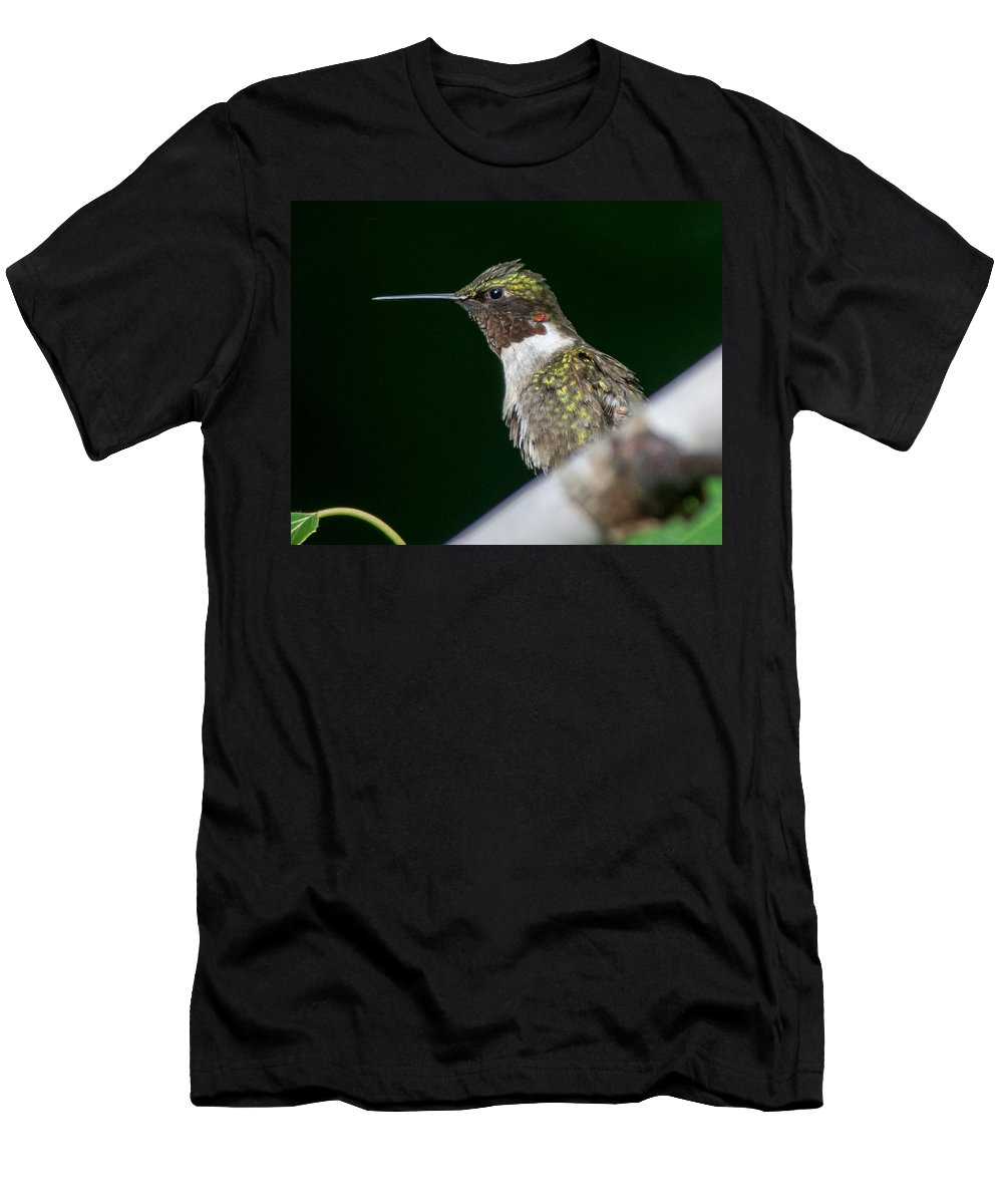 Bird Men's T-Shirt (Athletic Fit) featuring the photograph Humming Bird by Richard Kitchen