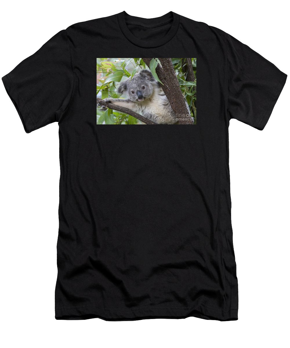 Feb0514 Men's T-Shirt (Athletic Fit) featuring the photograph Koala Joey Australia by Suzi Eszterhas