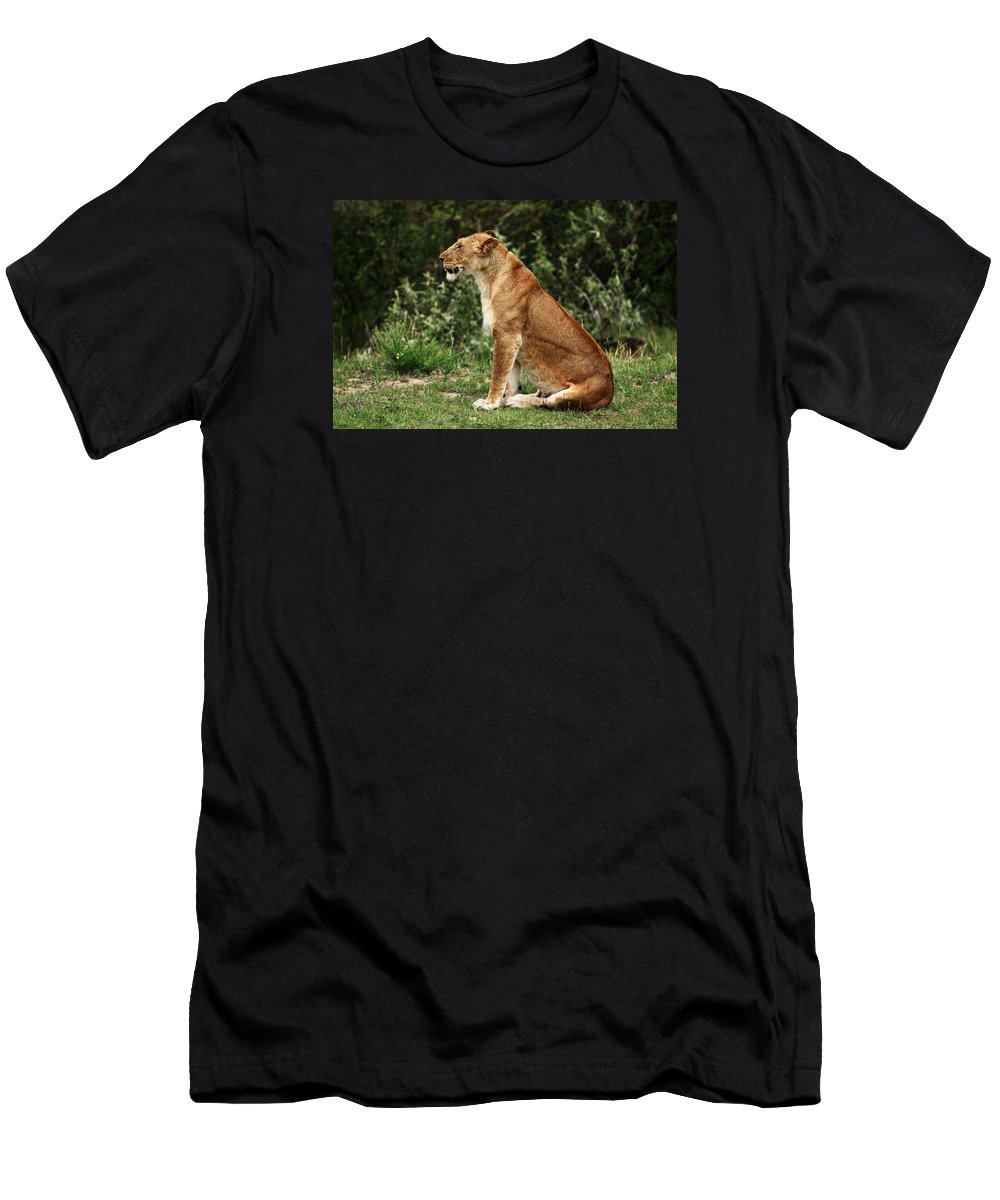 Lion Men's T-Shirt (Athletic Fit) featuring the photograph Lioness On The Masai Mara by Aidan Moran