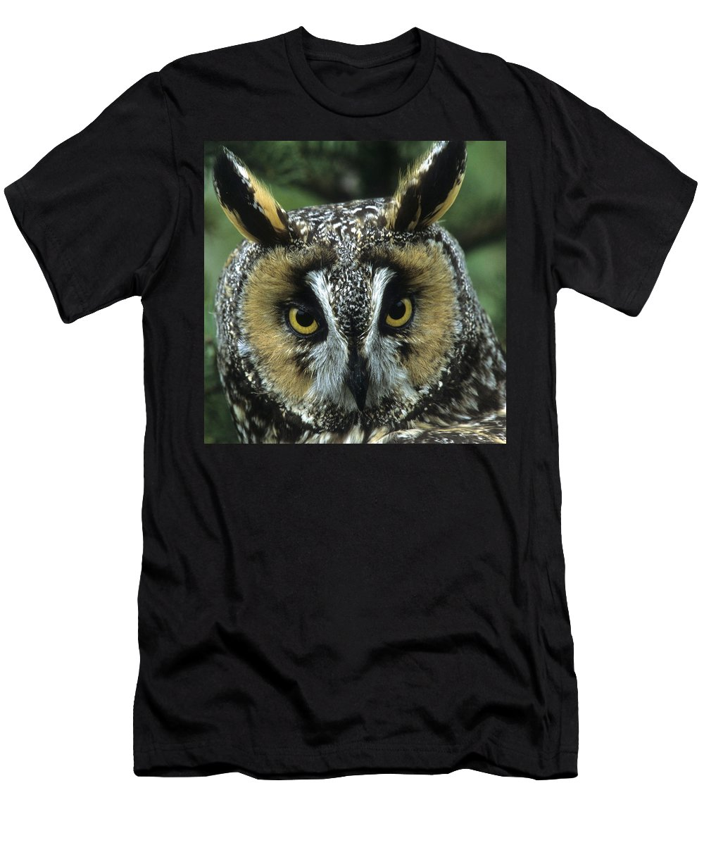 Owl Men's T-Shirt (Athletic Fit) featuring the photograph Long-eared Owl Up Close by Larry Allan