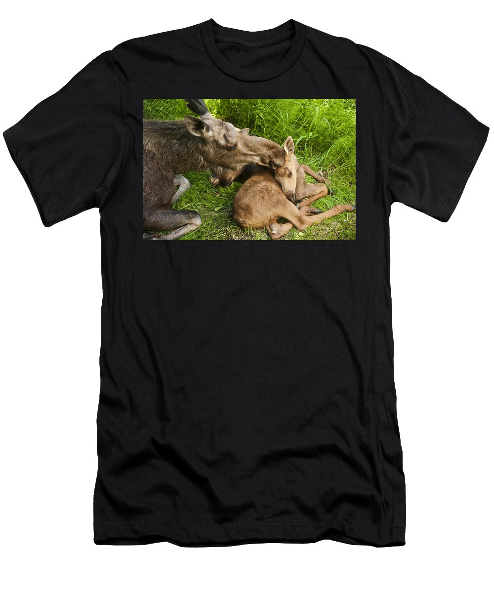Moose Men's T-Shirt (Athletic Fit) featuring the photograph Motherly Love by Ted Raynor