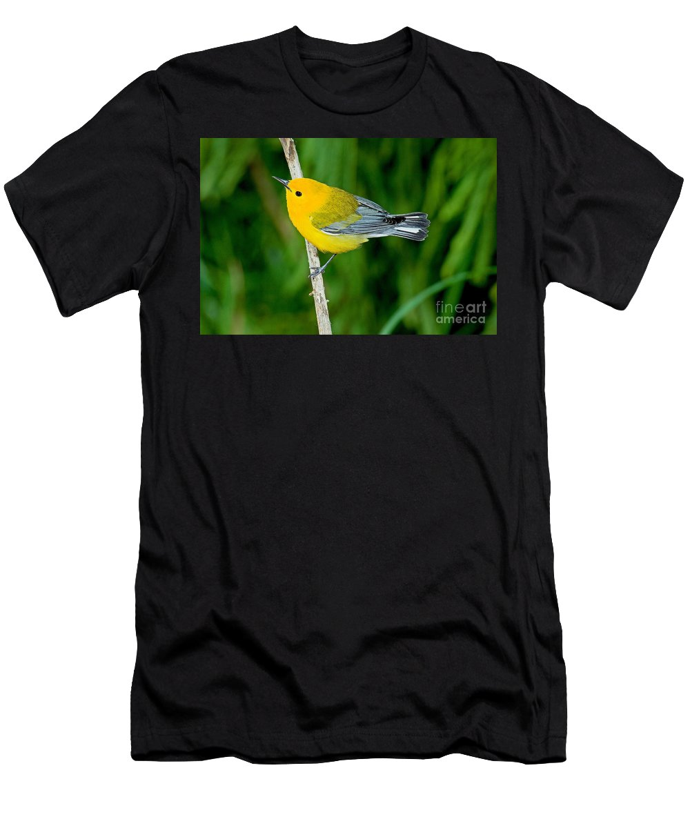 Prothonotary Warbler Men's T-Shirt (Athletic Fit) featuring the photograph Prothonotary Warbler by Anthony Mercieca