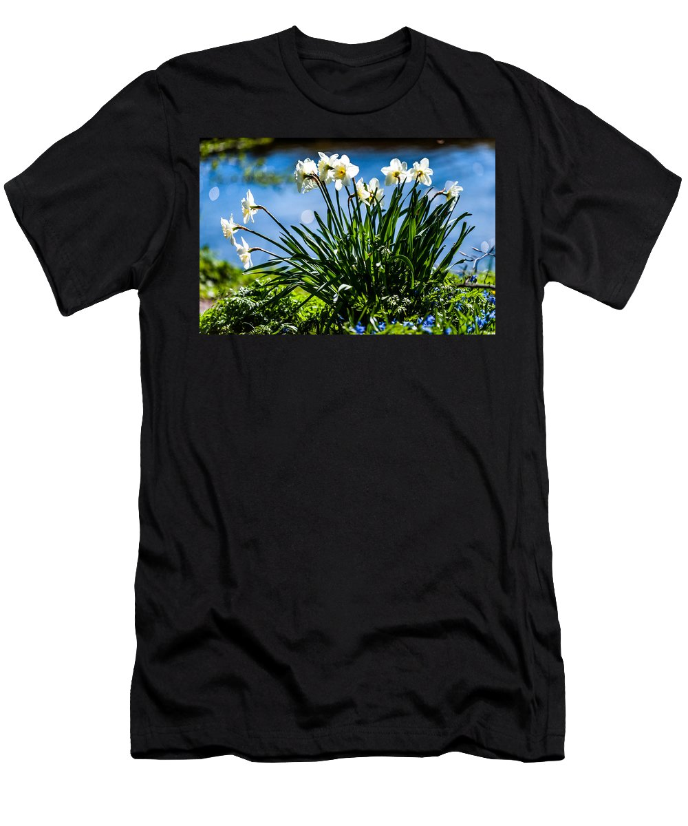 Spring Men's T-Shirt (Athletic Fit) featuring the photograph Spring Daffodils. Park Keukenhof by Jenny Rainbow