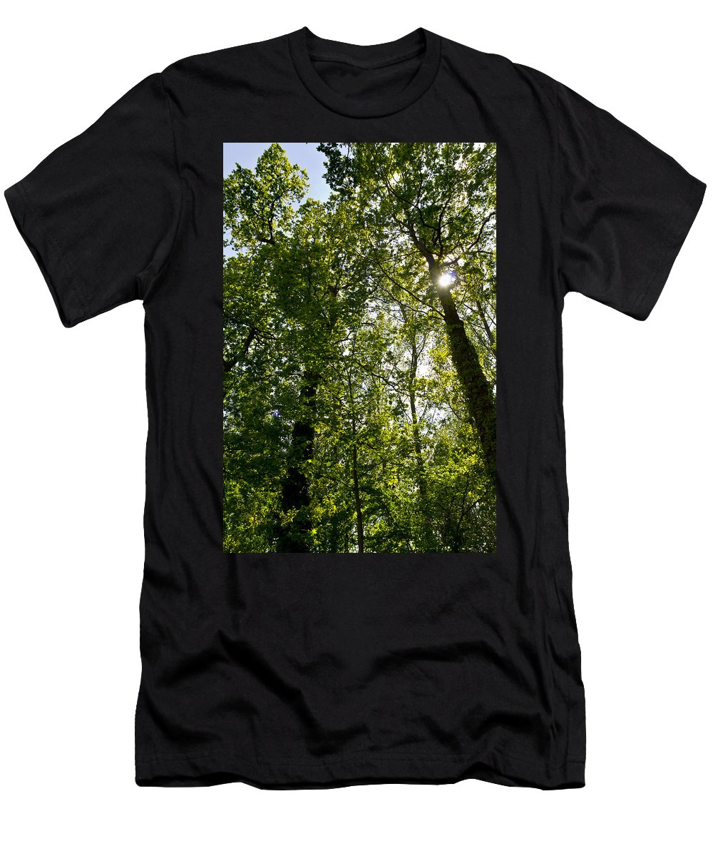 Tree Men's T-Shirt (Athletic Fit) featuring the photograph Summer Trees by David Pyatt