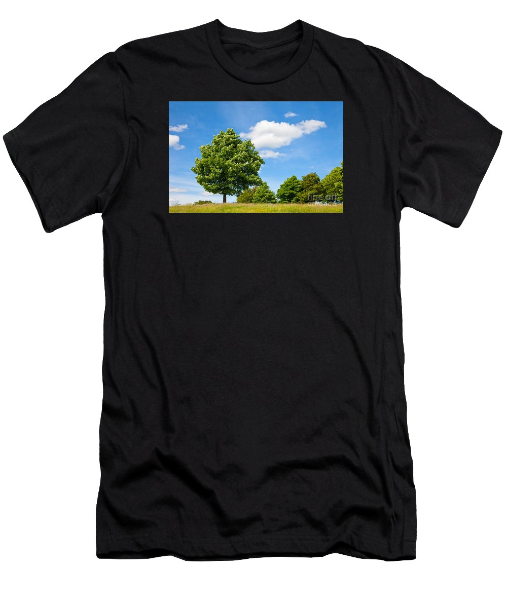 Sycamore Men's T-Shirt (Athletic Fit) featuring the photograph Sycamore Acer Pseudoplatanus by Liz Leyden
