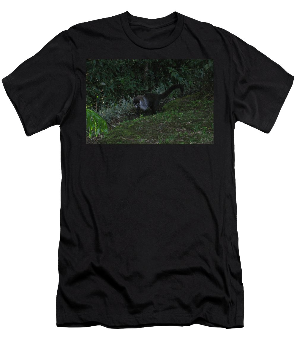 Tayra Men's T-Shirt (Athletic Fit) featuring the mixed media Tayra Costa Rica Animals Zoo Habitat Indigenous Population Mixing With Travellers Enjoying And Being by Navin Joshi