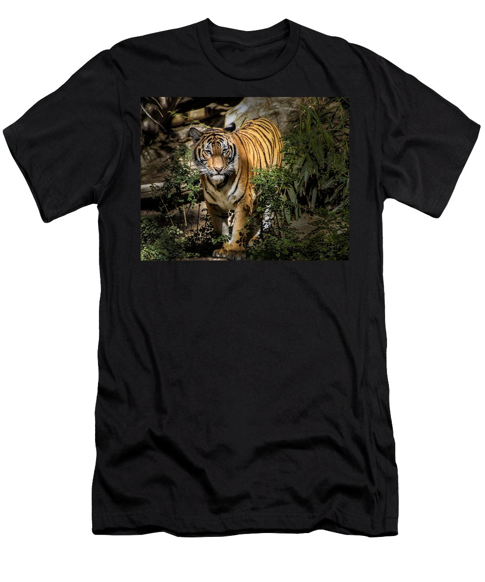 Tiger Men's T-Shirt (Athletic Fit) featuring the photograph Tiger by Jon Berghoff