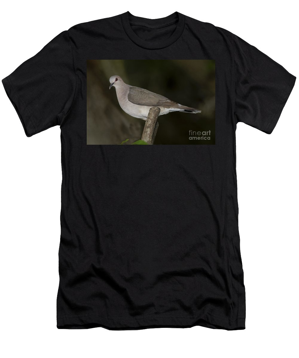 White-tipped Dove Men's T-Shirt (Athletic Fit) featuring the photograph White-tipped Dove by Anthony Mercieca