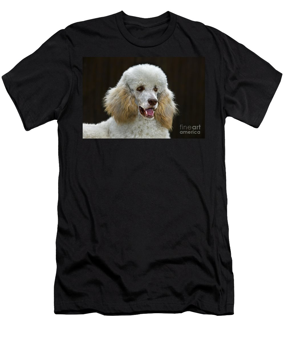 Standard Poodle Men's T-Shirt (Athletic Fit) featuring the photograph 101130p044 by Arterra Picture Library