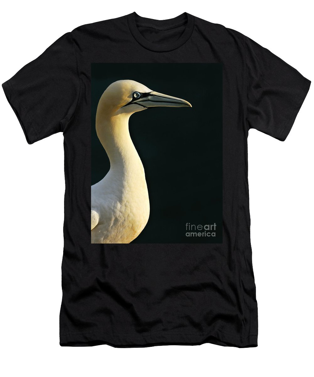 Northern Gannet Men's T-Shirt (Athletic Fit) featuring the photograph 120118p282 by Arterra Picture Library