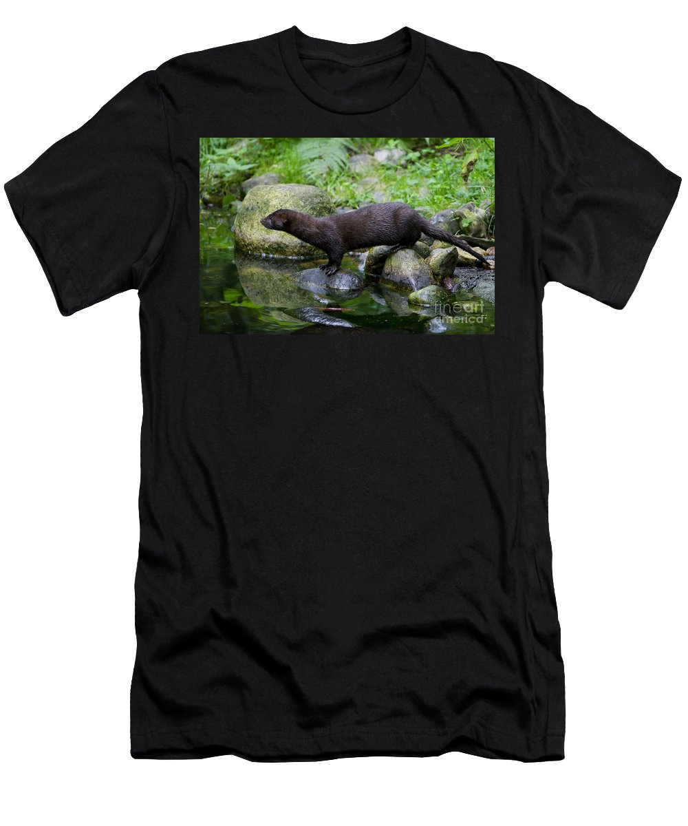 American Mink Men's T-Shirt (Athletic Fit) featuring the photograph 121213p013 by Arterra Picture Library