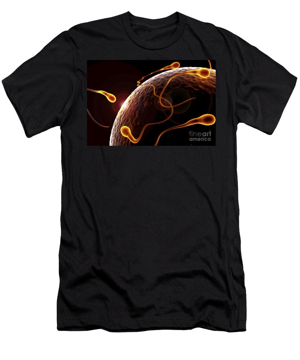 Human Anatomy Men's T-Shirt (Athletic Fit) featuring the photograph Fertilization by Science Picture Co