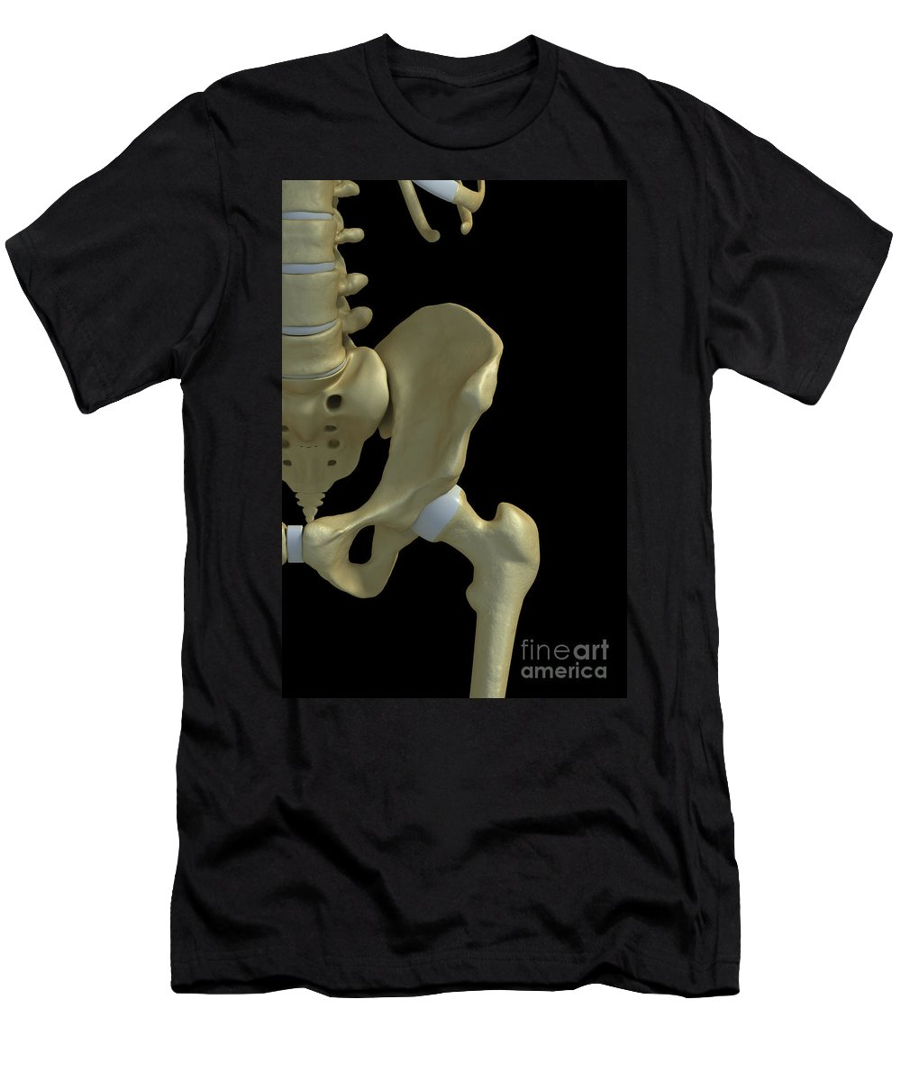 3d Visualisation Men's T-Shirt (Athletic Fit) featuring the photograph Bones Of The Hip by Science Picture Co